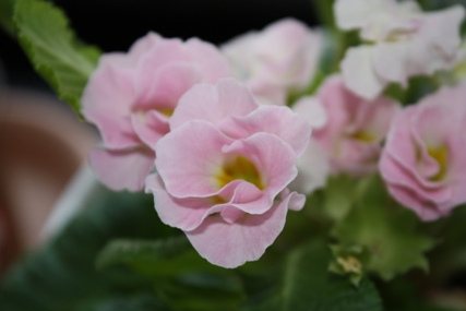 綺麗な花・・・♪_f0181000_22813100.jpg