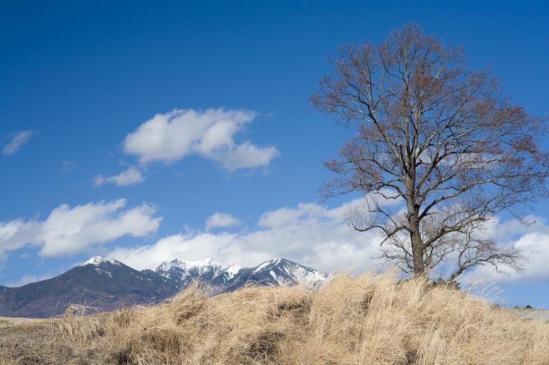 春一番で空真っ青!_c0137403_2325467.jpg