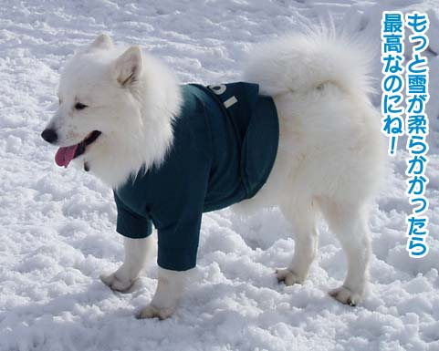 楽しかったサミー☆スマイル冬オフ_a0044521_2312594.jpg