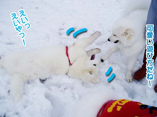 楽しかったサミー☆スマイル冬オフ_a0044521_23234171.jpg