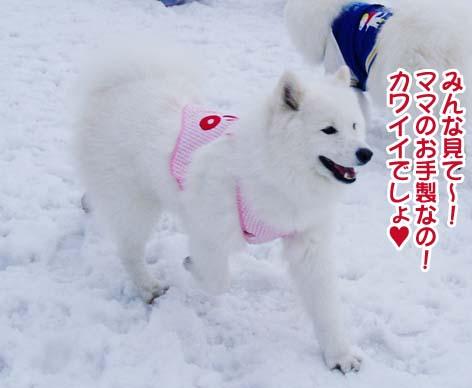 楽しかったサミー☆スマイル冬オフ_a0044521_2384577.jpg