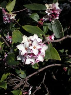 春がきて・・・_b0072729_11442528.jpg