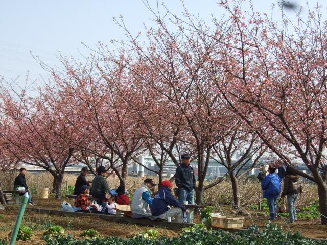 梅と桜の花.....競演...どちらも綺麗!_b0137932_1815757.jpg