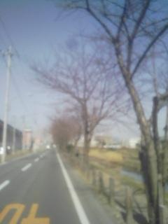 春はすぐそこ_a0088939_11262765.jpg