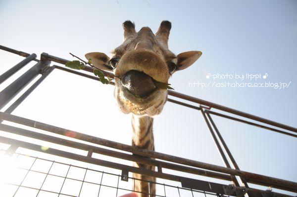 王子動物園サポーターズディ その1_b0024758_0161983.jpg