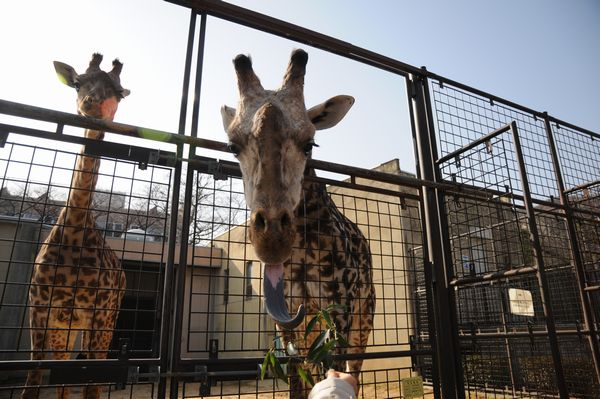 王子動物園サポーターズディ その1_b0024758_0163385.jpg