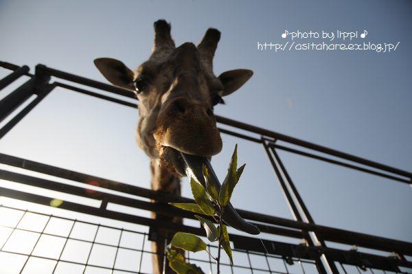王子動物園サポーターズディ その1_b0024758_016910.jpg
