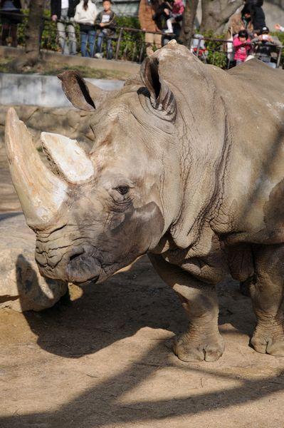 王子動物園サポーターズディ その1_b0024758_0174465.jpg