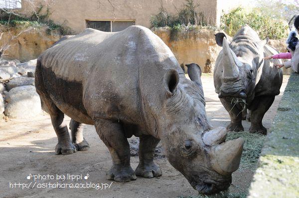 王子動物園サポーターズディ その1_b0024758_0182631.jpg