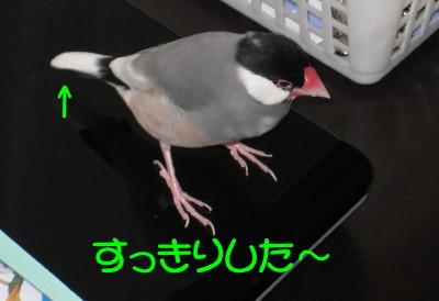 b0158061_22134726.jpg