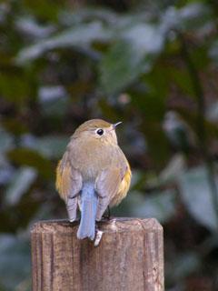 1月24日の鳥見at 自然教育園_a0004863_17395931.jpg