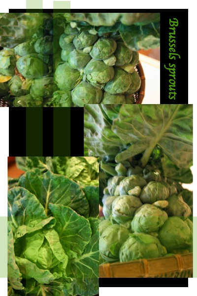 芽キャベツ 2009_c0156468_19134234.jpg