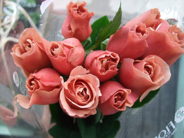 オークリーフ(桃と菜の花)_f0049672_13223721.jpg