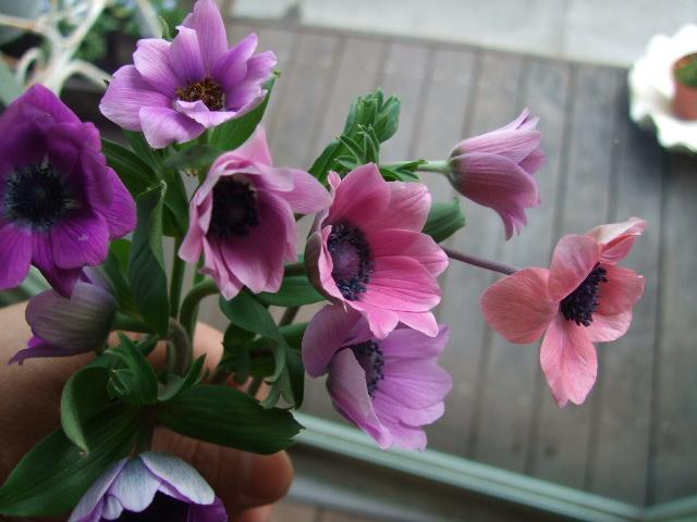 オークリーフ(桃と菜の花)_f0049672_13225554.jpg
