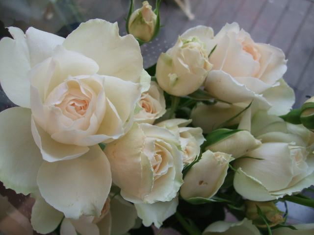 オークリーフ(桃と菜の花)_f0049672_13251069.jpg