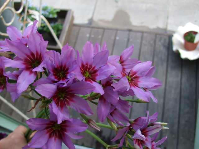 オークリーフ(桃と菜の花)_f0049672_13251822.jpg
