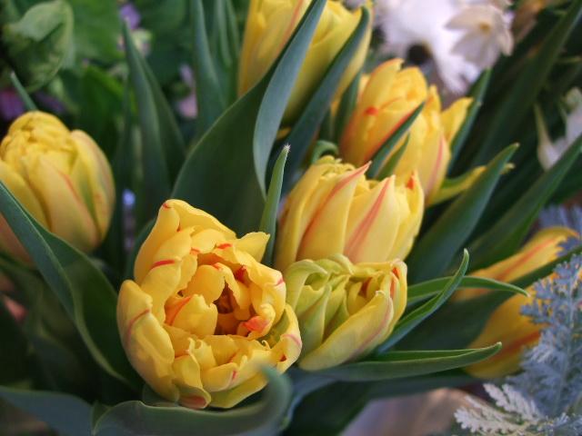 オークリーフ(桃と菜の花)_f0049672_13254618.jpg