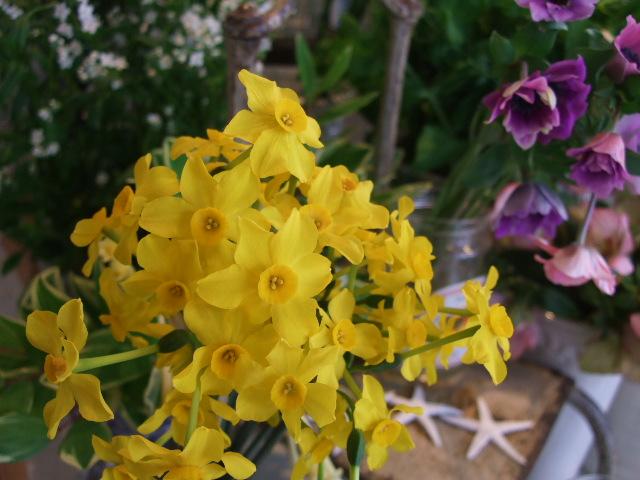 オークリーフ(桃と菜の花)_f0049672_13255622.jpg