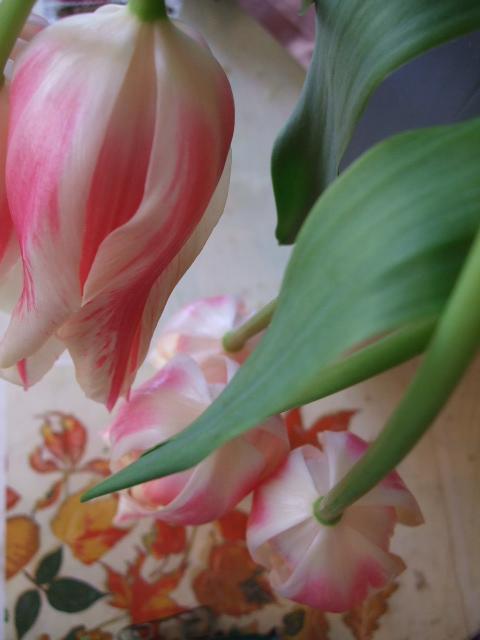 オークリーフ(桃と菜の花)_f0049672_13342792.jpg