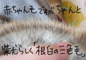 b0057675_2141186.jpg