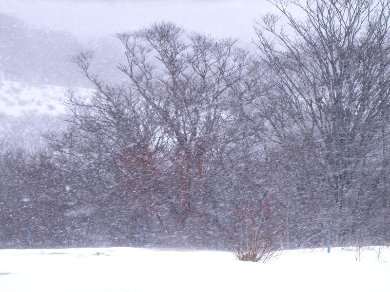 冬の荒川高原を歩く。。。_f0075075_3115764.jpg