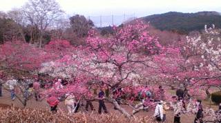 梅を讃える昼下がり_e0127286_115542.jpg