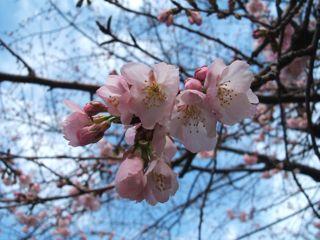 春ですか?_e0149587_1322116.jpg