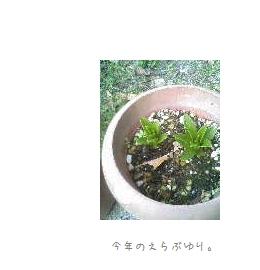 b0120001_22544.jpg