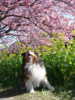 伊豆のさくらで春を想う_c0053520_23502190.jpg