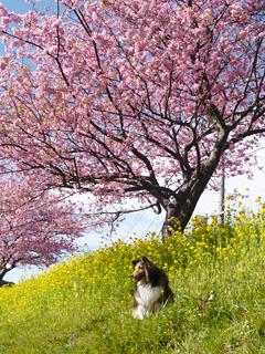 伊豆のさくらで春を想う_c0053520_2354456.jpg