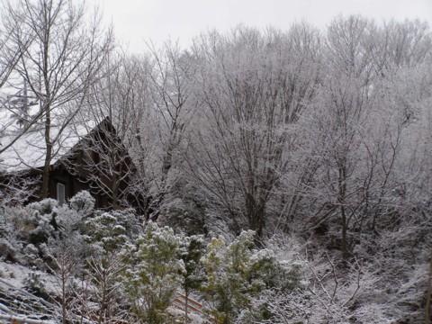 河津桜に雪が・・・_f0043750_1835383.jpg