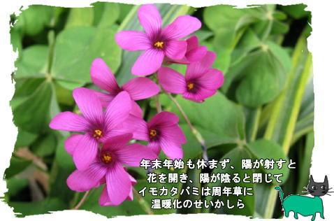f0137096_2123325.jpg