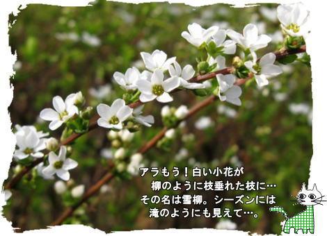 f0137096_213979.jpg