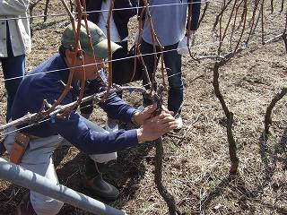 グレイスワイナリー(中央葡萄酒)剪定体験ツアー その1_d0113725_1181487.jpg