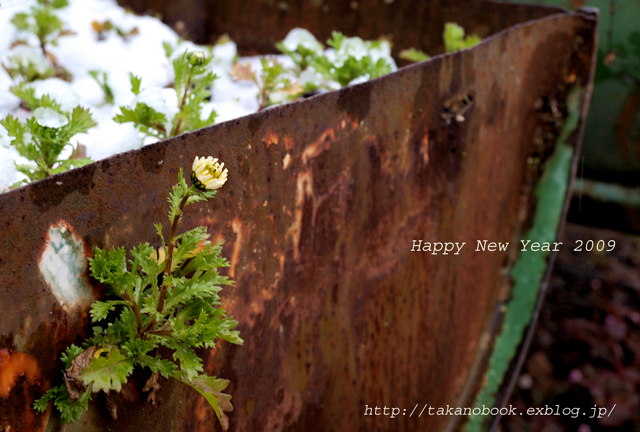 new year cards_f0193425_23363133.jpg