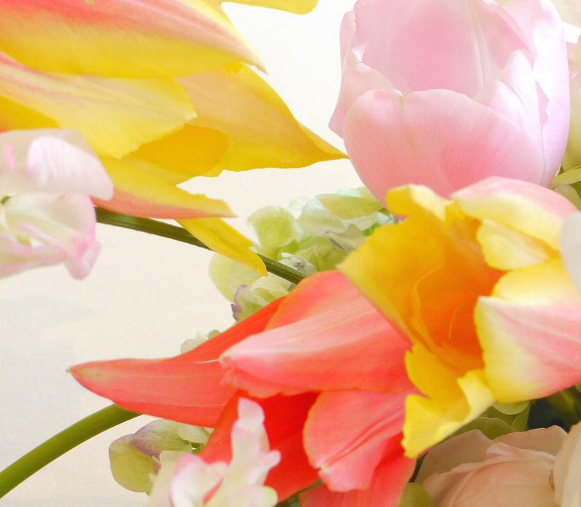 花の色 春の黄色 _a0042928_2335348.jpg
