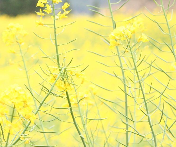 花の色 春の黄色 _a0042928_2344586.jpg