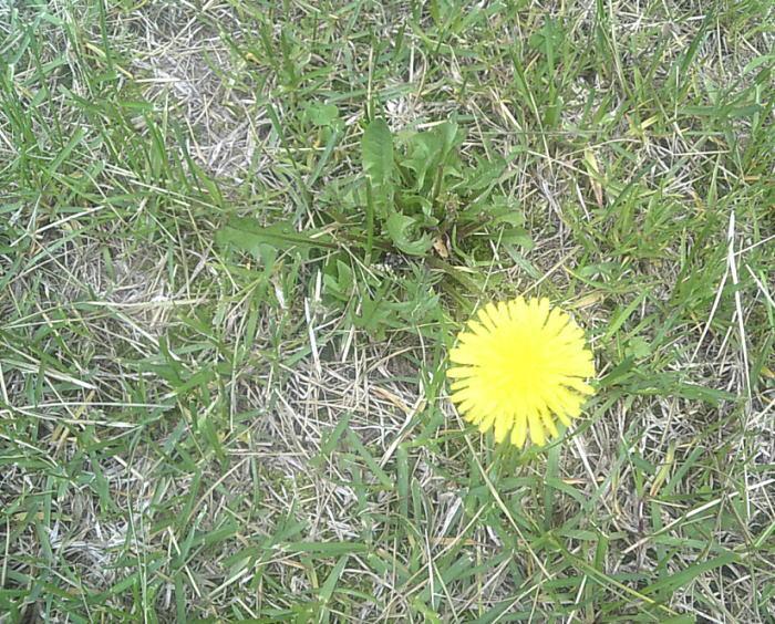 花の色 春の黄色 _a0042928_235168.jpg