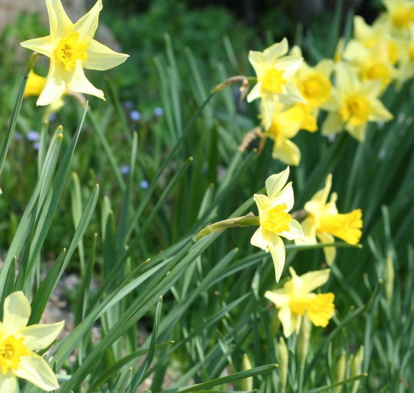 花の色 春の黄色 _a0042928_2353088.jpg