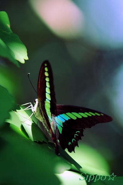 ■■Graphic Emerald■■_c0195662_1765516.jpg