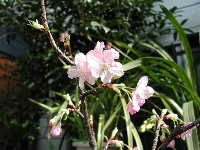 春_e0170562_14171312.jpg