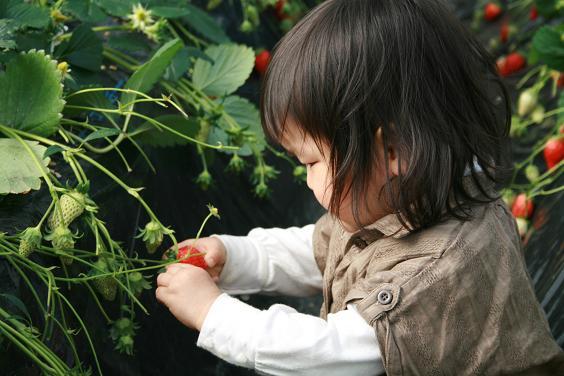 イチゴイチゴ。_e0045565_0435264.jpg