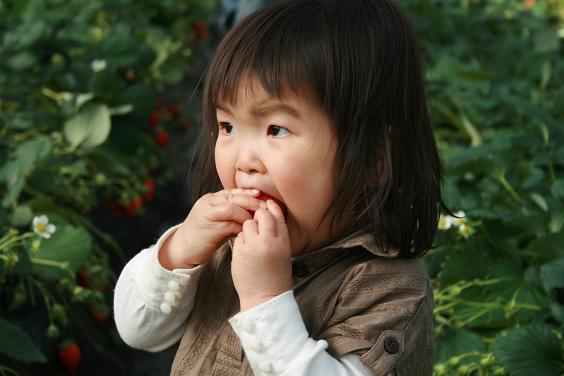 イチゴイチゴ。_e0045565_0442680.jpg
