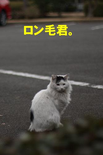 b0130271_1084774.jpg