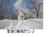 c0182012_12111523.jpg