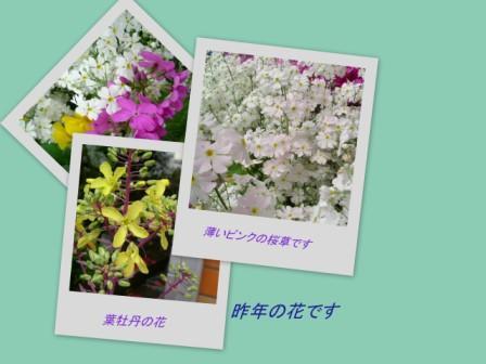d0048312_20311368.jpg