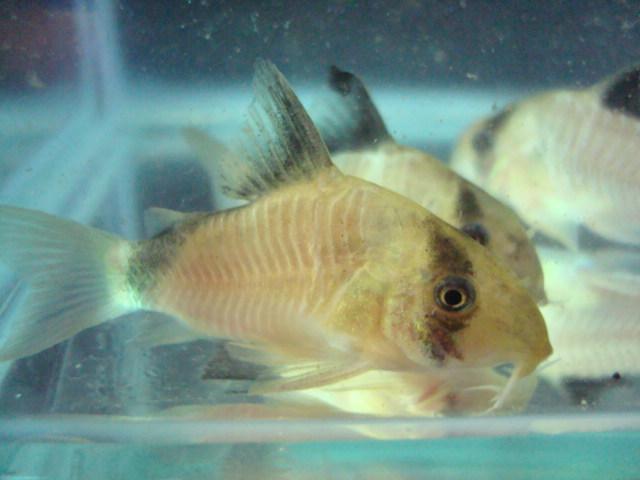 熱帯魚・水草_f0189122_15272225.jpg