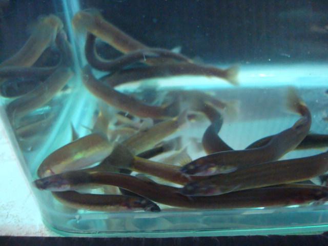 熱帯魚・水草_f0189122_1528279.jpg