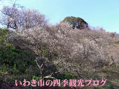 f0105342_15301281.jpg