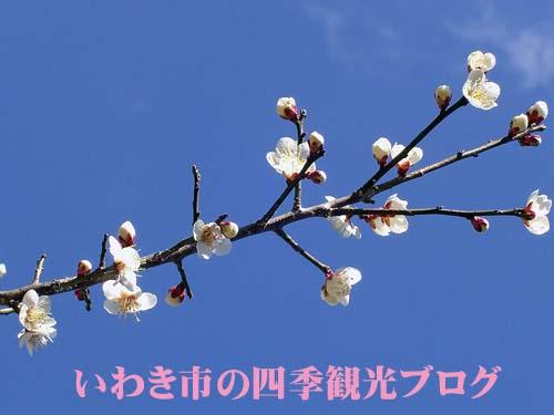 f0105342_15305733.jpg